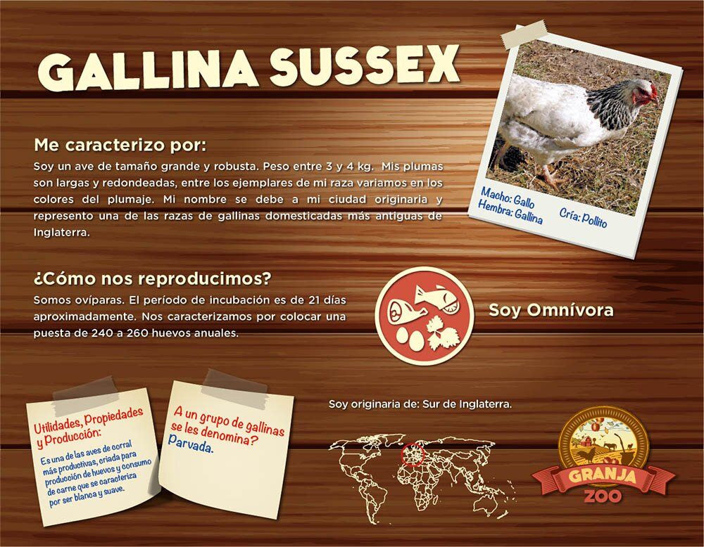 Gallina sussex